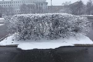 Снег в российском Екатеринбурге. Фото стихии