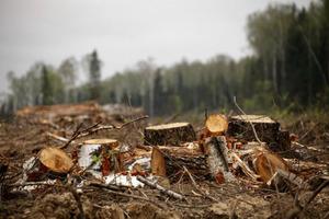 Вчені попередили про те, коли Україна позбудеться лісу