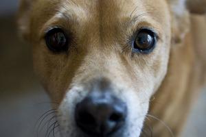 У Миколаєві масово потруїли собак: тварини померли в агонії
