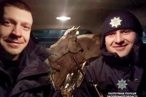Твори добро: обессиленную косулю спасли полицейские Запорожья