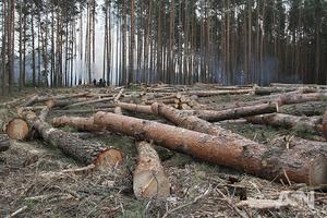 Под видом борьбы с короедом на Волыни уничтожают заповедные леса