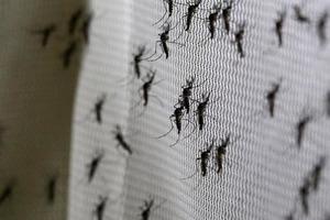 Билл Гейтс создает армию комаров секс-убийц