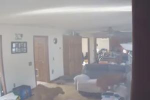 Собака устроила пожар в доме в США, воруя блины с плиты