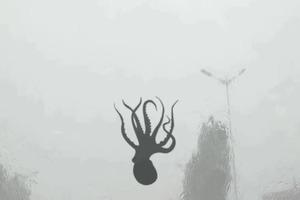 В Китае выпал дождь с креветками, осьминогами и морскими звездами