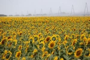 Українські аграрії втратять 10 мільярдів гривень