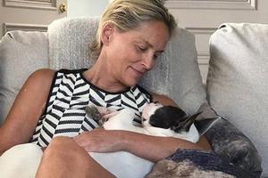 60-летняя Шэрон Стоун рассталась с очередным молодым женихом