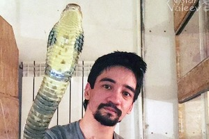 Российский эксперт из-за развода в прямом эфире убил себя укусом змеи (18+)