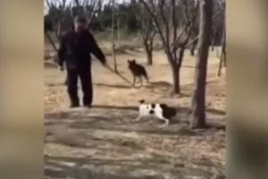Стая озверевших кошек едва не разорвала пенсионера и его собаку