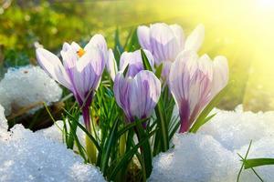 Синоптик обрадовала весенним прогнозом