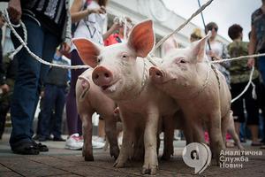 Украина запретила ввоз свинины из Польши из-за чумы