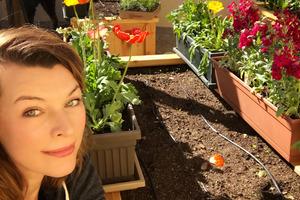 Мила Йовович посадила огромный огород и заговорила на русском