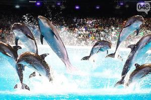 Життя гірше смерті: в Одеському дельфінарії дельфіниха навмисно втопила своє дитинча