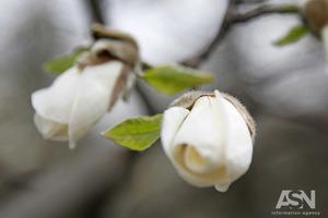 Народные приметы на 19 апреля - Евтихий тихий и Ерема Пролетный