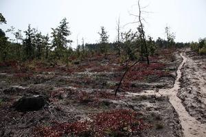 Мені - деревину, тобі - землю. Хто вирубав половину заповідного лісу в Пущі-Водиці