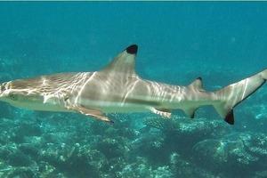 Трое американцев арестованы из-за зверского обращения с акулой