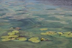 Изменение климата продлевает период «цветения» рек в Украине