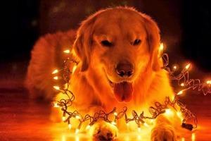Східний календар: настав рік жовтого земляного собаки