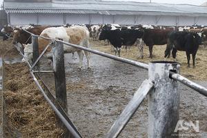 Молоко от населения будут принимать только до 2020 года – МинАПК