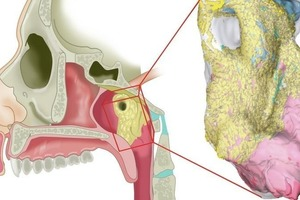 В центре головы человека обнаружен неизвестный науке орган