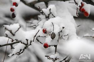 Вторая волна холодов и снегопадов пришла в Украину