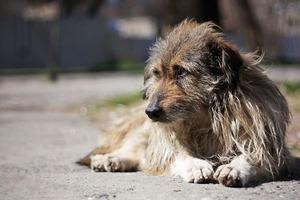 Охрана советника Порошенко - олигарха Косюка убивает бездомных собак в приюте под Киевом
