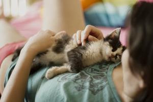 Кішка лягає до вас на одне і те ж саме місце. Що це означає?