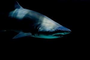 Зоологи поймали самую старую акулу на планете