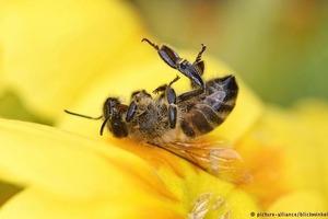Экологи бьют тревогу: В Германии вымерли почти все насекомые