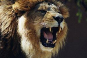 Уже прощалась с жизнью: туристку из России в Крыму покусал лев