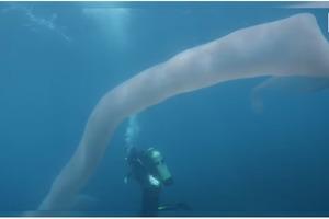 Дайвери зняли на відео загадкового восьмиметрового монстра