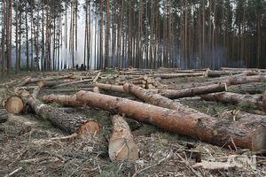 Суровые западные тиски: Украина отдаст за кредиты лес и землю – экономист