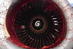 Самолет с россиянами столкнулся со стаей птиц. Происшествие успели записать на видео