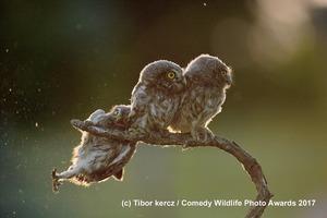 Определено самое смешное фото дикой природы в этом году