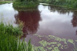 В кровавом озере под Броварами передохла вся рыба