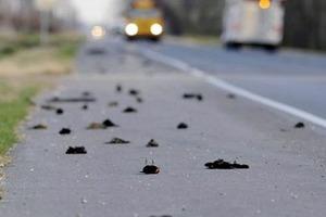 Всю ніч кружляли над селищем, кричали і падали. Тисячі птахів таємничо загинули в Росії
