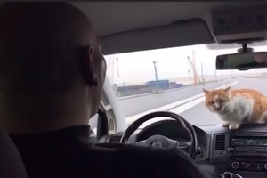 Валуев с бездомным котом инспектировали кусок Керченского моста