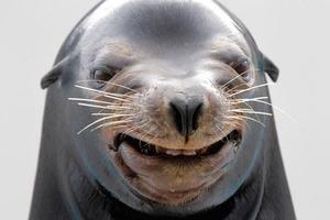 Морской лев отшлепал каякера осьминогом в смешном видео