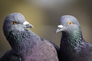 Барбекю по-российски. Супруги устроили резню в голубятне
