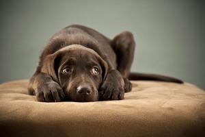 Ученые пояснили, почему мы больше сочувствуем собакам, чем людям