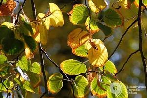 Синоптики назвали дату, когда в Украину придет похолодание