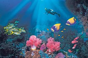 Где поплавать с аквалангом в Таиланде и получить максимум удольствия