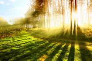 Все загаданные желания скоро сбываются: День летнего солнцестояния 2018