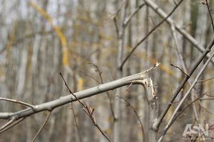 3 тысячи гектаров леса усыхает в Украине еженедельно. Экологи говорят о всеукраинском бедствии