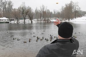 Не дотянут до весны. Горожан призвали подкармливать птиц на водоемах и в скверах