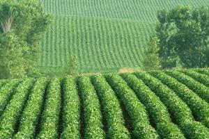 Скандальна поправка до Податкового кодексу веде до зростання тіньового ринку сої та ріпаку