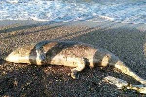 Странное чудище выбросило на берег моря в Херсоне