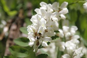 Не будет урожая - не будет еды: в пяти областях Украины поддельной агрохимией убили всех пчел