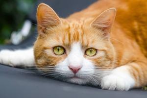 Потрясает до глубины души. Как кот увидел своего погибшего хозяина