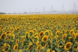 Логистика подорожала в три раза: из-за закрытия ж/д станций аграрии не могут вывезти урожай