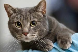 Британке запретили иметь домашних животных из-за плохого лечения кошки